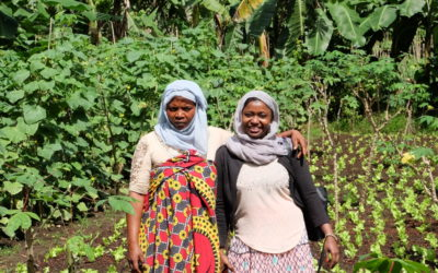Comoros: developing export and food value chains