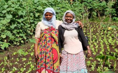 Comores : développer les filières de rente et de produits maraichers